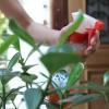 Ao molhar as plantas durante 10 minutos com a mangueira aberta, o consumo de água pode chegar a 186 litros. Para economizar, regue de manhã ou à noite, o que reduz a perda por evaporação. Use um regador ou, em último caso, uma mangueira com esguicho-revólver, podendo chegar a uma economia de 96 litros de água.