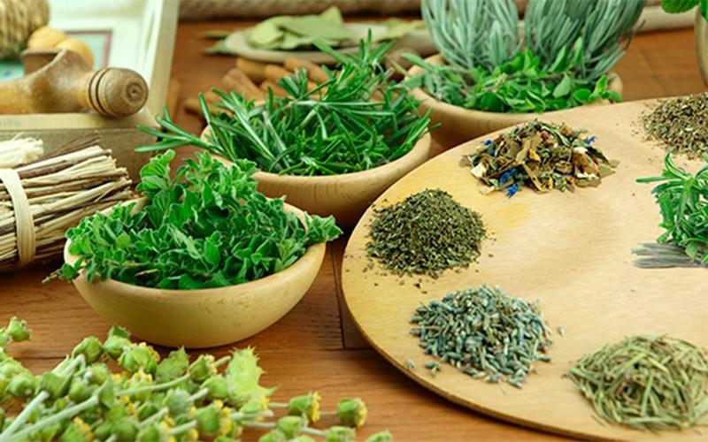 Conheça a fitoterapia, ciência que estuda as plantas