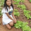 BUENA VOLUNTAD EN ACCIÓN (Paraguay) —El programa ayuda a habitantes de lugares pobres a desarrollar huertas comunitarias, contribuyendo a la generación de recursos, además de atender la demanda local de verduras y legumbres.